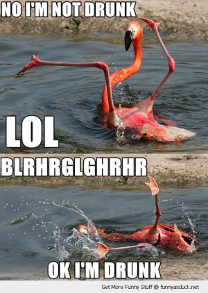 drunk flamingo falling water bird animal funny pics pictures pic ...