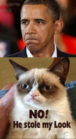 Funny Grumpy Cat. President Obama stole my look.