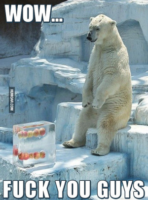feel for this poor bear…