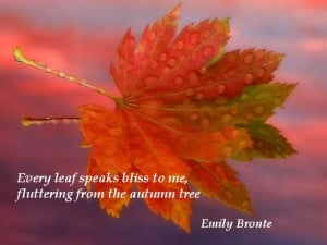 ... speaks bliss to me, fluttering from the autumn tree. (Emily Bronte