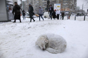 stray dog sleeps in the snow as people pass by on a street in ...