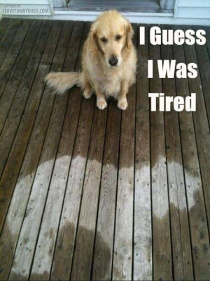 ... Dogs, Silly Dogs, Funny Pictures, Fell Asleep, Naps Time, Rain, Animal