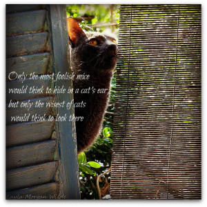 Loss of cat quotes wallpapers