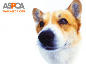 Against Animal Cruelty! ASPCA Dog Wallpaper