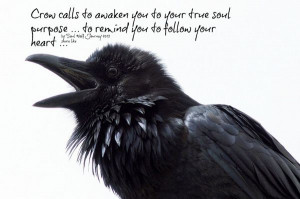 Message from the crow