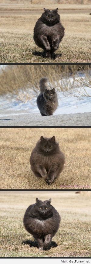 Majestic cat pictures - Funny Pictures, Funny Quotes, Funny Memes, ...