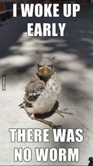 Early bird gets the worm? Not so fast...