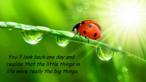 Free Quotes About Ladybugs