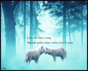 Wolf Wisdom - friendship, white, wisdom beautiful, grey wolf, wild ...
