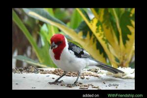 cardinal bird quotes