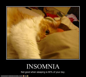 funny pictures cat has insomnia