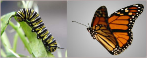 Do You Want to be a Caterpillar or a Butterfly?