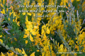 bible verses peace of mind