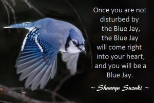 Once you are not disturbed by the blue jays, the blue jay will come ...
