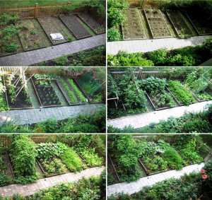 Vegetable Garden Layout Plans Quotes Download Wallpaper Vegetable ...
