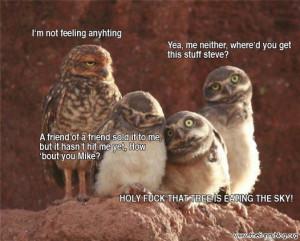 funny-owl-story-blog-nature-animals