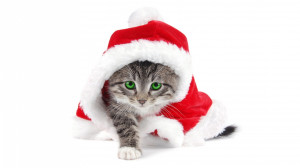 Funny Animal Pictures Quotes Xmas