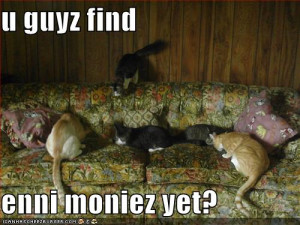 Cats looking for money in couch, lol cats