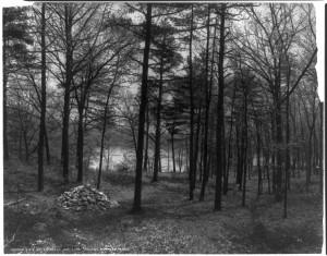 Walden & Walden; of, een hut in het bos