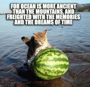 Lovecraft Plus Kittens Makes for Adorable Cosmic Horror
