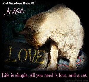 Merlin's # 1 Rule for Cats and Humans
