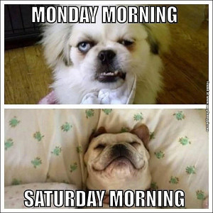 funny-pictures-monday-morning-vs-saturday-morning