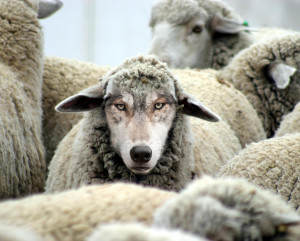 Wolf in Sheep's Clothing""