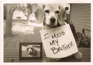 Missing My Brother Quotes Quotes i miss my brother