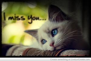 cat, cute, girls, i miss you, love, pretty, quote, quotes, vintage