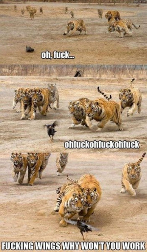 funny-pictures-animals-bird-tigers
