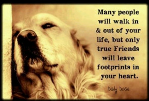 Dogs, A True Friend, Indeed!