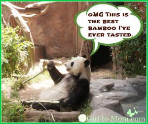 funny-wallpapers-funny-panda-pictures-wallpaper-34878.jpg