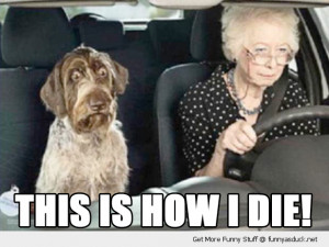 scared shocked dog animal old lady senior citizen driving car this is ...