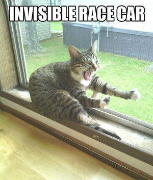 Funny-cat-Invisible-race-car-resizecrop--.jpg