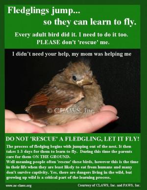 Found a baby bird?