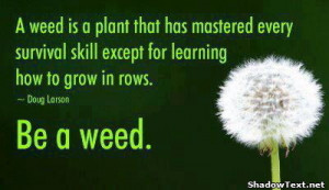 Weed Quotes And Sayings