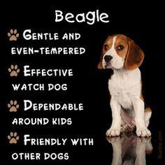 ... Beagles Animal, Dogs Art, Art Prints, Beagles Art, Beagles Portraits