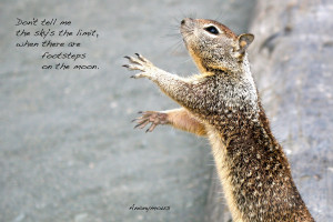 squirrel reaching out, paws visible with a quote:
