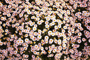 can download Vintage Flowers Tumblr Backgrounds 4297 Full HD Wallpaper ...