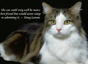 ... be mans best Friend but would never stoop to Admitting it - Cat Quote