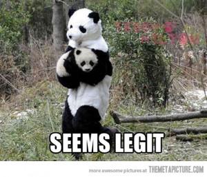 Funny photos funny baby Panda zoo costume