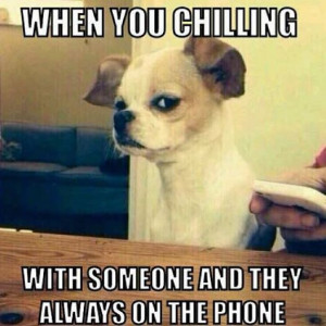 funny-phone-dog-reaction
