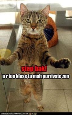 needs personal space. #cat #humor #cats #funny #meme #lolcats #quotes ...
