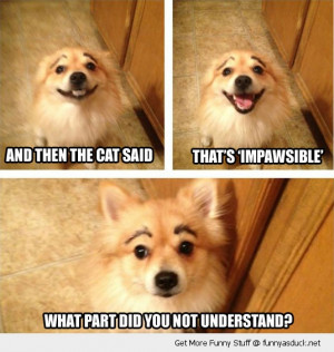 dog cat joke animal impawsible eyebrows funny pics pictures pic ...