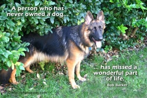 German Shepherd Puppies Quotes