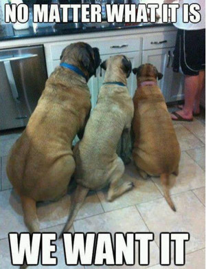 Funny animal pictures with captions, animal caption pictures, funny ...