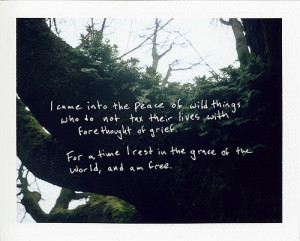 grace, live, nature, peace, photography, quotes, thatswhatshesaid ...