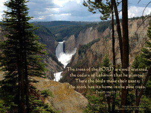 Bible verse reads;