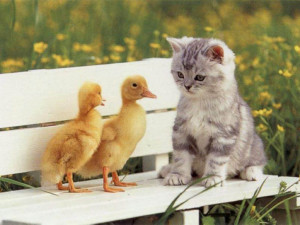 Cute Kittens Cute Wallpapers