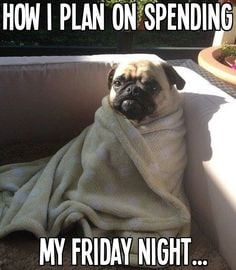 ... Nights funny cute animals winter adorable dog friday pug friday quotes
